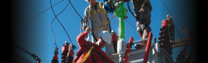 fall protection harnesses & lifelines